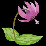 flower_katakuri