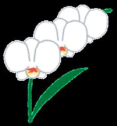 flower_ran