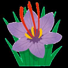 flower_saffron_safuran