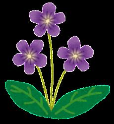 flower_sumire