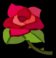valentinesday_rose